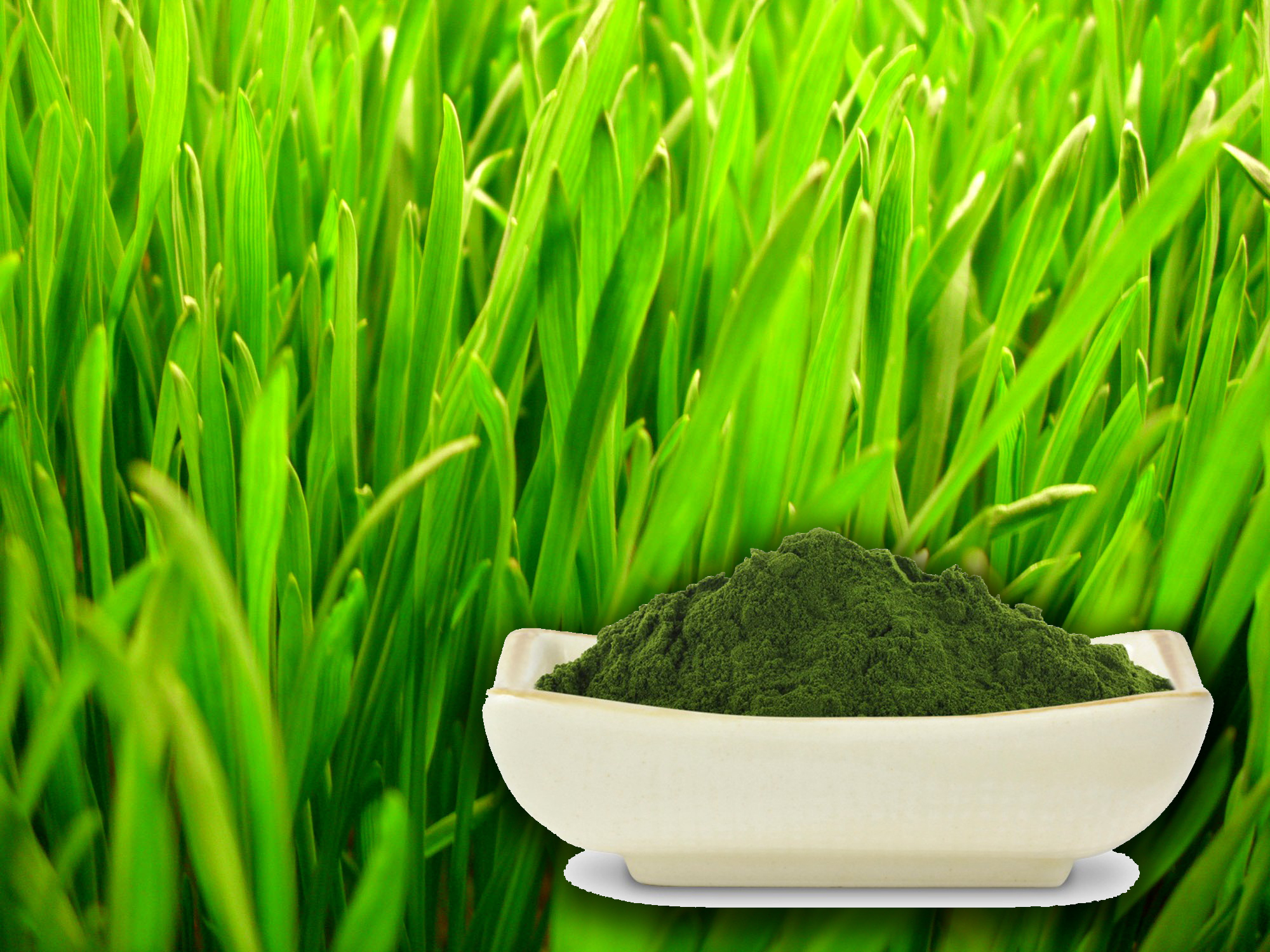 Búzafű kivonat por (Wheat Grass Extract)